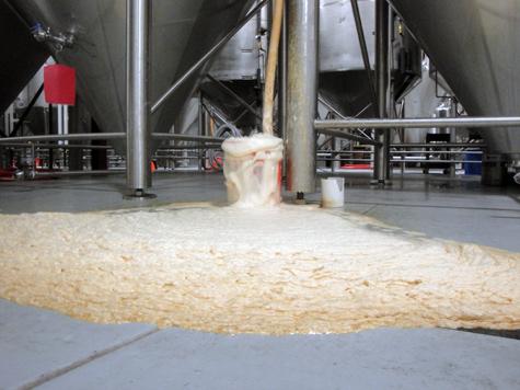 Oscar Blues Happy yeast from Dales Pale ale in Fermentor